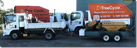 Tree felling and mulching equipment